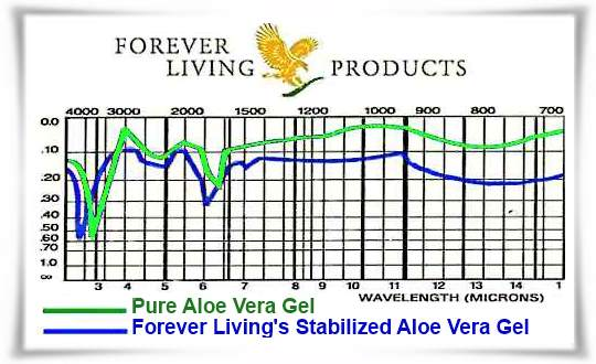 Comparison Chart of Nutrients Between Pure Aloe Vera and Forever Living's Stabilized Aloe Vera